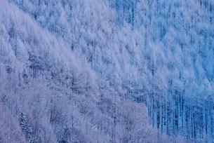 乗鞍高原 日本 長野県 松本市の写真素材 [FYI04288066]