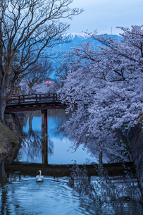松本城 日本 長野県 松本市の写真素材 [FYI04288075]