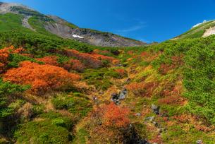 乗鞍岳 乗鞍エコーライン 紅葉 日本の写真素材 [FYI04288091]