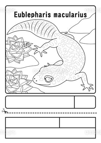 ヒョウモントカゲモドキ ぬりえ 応募用紙のイラスト素材 [FYI04288176]