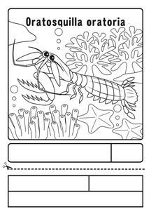 シャコ ぬりえ 応募用紙のイラスト素材 [FYI04288182]