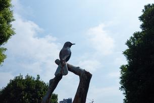 鳥オブジェの写真素材 [FYI04288469]
