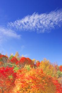 もみじ湖のもみじ景勝地の紅葉の写真素材 [FYI04288646]