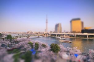 隅田公園の桜とスカイツリーの夕景 ミニチュア風景の写真素材 [FYI04288727]