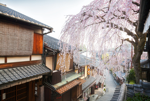 産寧坂と満開の枝垂桜の写真素材 [FYI04288893]