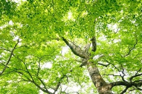 ブナの森の写真素材 [FYI04289283]