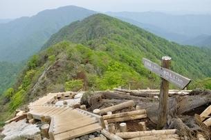 新緑の丹沢主稜の山並みの写真素材 [FYI04289334]