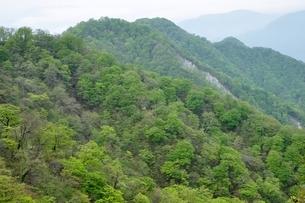 緑の山地の写真素材 [FYI04289340]