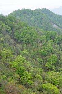 緑の山地の写真素材 [FYI04289341]