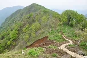 新緑の山道は続くの写真素材 [FYI04289344]