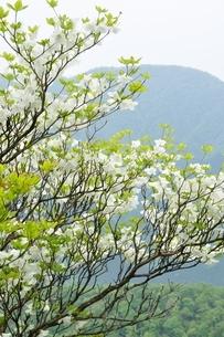 シロヤシオに大室山の写真素材 [FYI04289367]