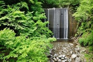 緑の中の堰堤の写真素材 [FYI04289409]