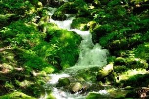 緑の渓流の写真素材 [FYI04289413]