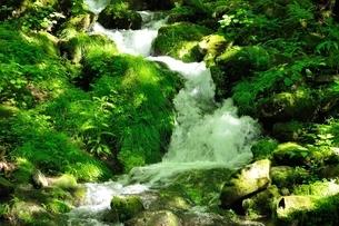 緑の渓流の写真素材 [FYI04289414]