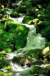 緑の渓流の写真素材 [FYI04289415]