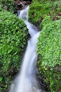 山の湧水の写真素材 [FYI04289422]
