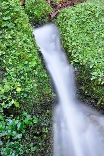 山の湧水の写真素材 [FYI04289424]
