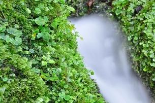 山の湧水の写真素材 [FYI04289425]