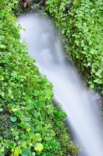 山の湧水の写真素材 [FYI04289426]
