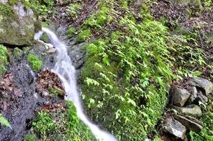 山の湧水の写真素材 [FYI04289427]