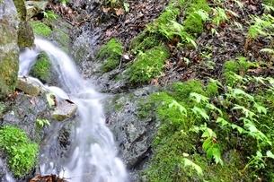 山の湧水の写真素材 [FYI04289428]