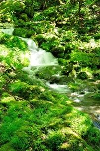 緑の渓流の写真素材 [FYI04289429]