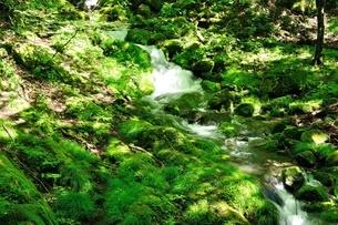 緑の渓流の写真素材 [FYI04289431]