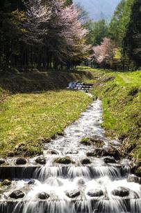 信州 長野県白馬村 姫川源流自然探勝園の横を流れる鳴沢川と桜の写真素材 [FYI04289479]