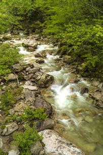 信州 長野県北安曇郡松川村 馬羅尾高原の渓流の写真素材 [FYI04289488]