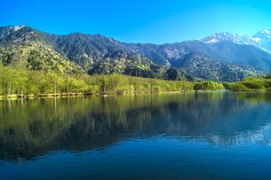 信州 長野県松本市上高地 朝の大正池の写真素材 [FYI04289499]