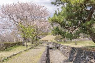 桜咲く天平の丘公園の写真素材 [FYI04289578]