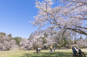 桜咲く泉自然公園の写真素材 [FYI04289600]