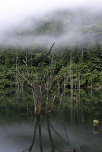 早朝の自然湖の写真素材 [FYI04289639]