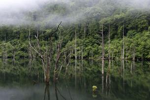 早朝の自然湖の写真素材 [FYI04289641]