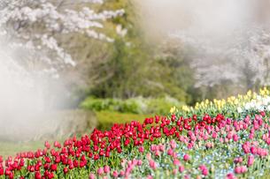 春爛漫の写真素材 [FYI04289664]