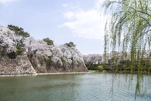 新緑のヤナギ越しに見る堀と石垣と満開のサクラ並木の写真素材 [FYI04289698]