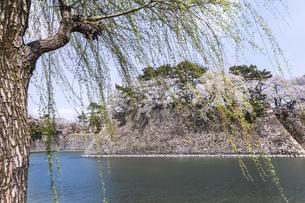 新緑のヤナギ越しに見る堀と石垣と満開のサクラの写真素材 [FYI04289700]