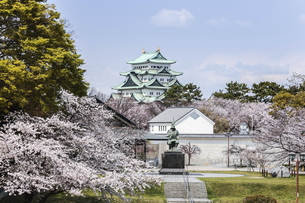 満開のサクラの中に見る名古屋城天守と加藤清正像の写真素材 [FYI04289717]