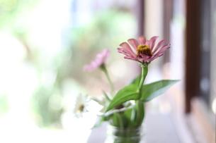 花瓶に入った花の写真素材 [FYI04289785]