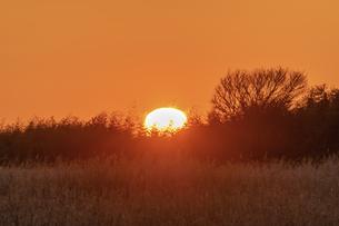 草原の日の出の写真素材 [FYI04289894]