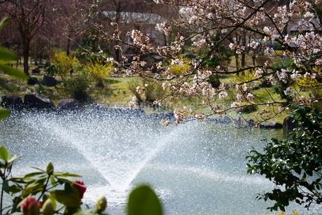池に噴水のある春の公園の写真素材 [FYI04289922]