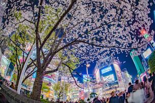 渋谷駅前の桜の写真素材 [FYI04290071]