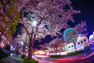 夜桜とコスモクロックの写真素材 [FYI04290078]