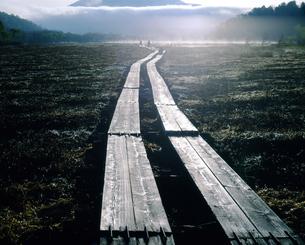 尾瀬ヶ原と早朝の光る木道の写真素材 [FYI04290103]