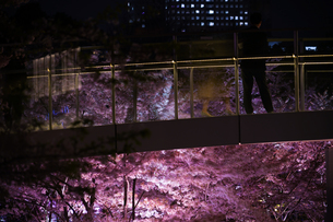 東京ミッドタウンの桜を眺める人々の写真素材 [FYI04290129]