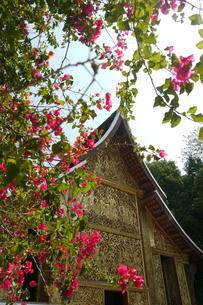 ラオスの神社 ラオスの寺院 東南アジアの寺院の写真素材 [FYI04290357]