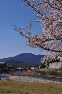 公園 桜の写真素材 [FYI04290726]