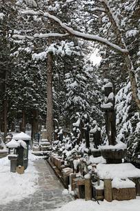 冬の高野山奥之院参道の写真素材 [FYI04290800]