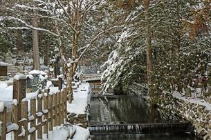 冬の高野山奥之院参道の写真素材 [FYI04290802]