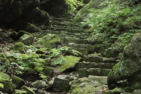 森の階段の写真素材 [FYI04290818]